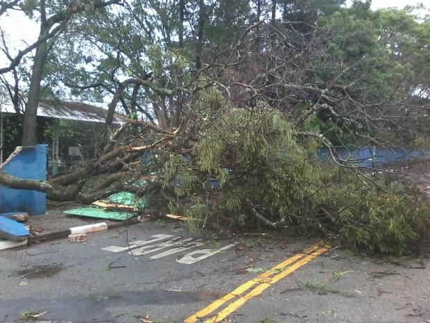 Chuva causou queda de árvores em Atibaia nesta segunda (29). (Foto: Arquivo pessoal/Leandro Barbosa)