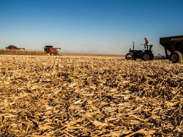 Colheita da safrinha de milho do ciclo 2014/2015 avança em Mato Grosso do Sul (Foto: Divulgação/Aprosoja/MS)