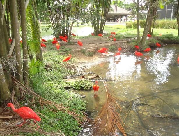 Aves que nascem no Mangal são criados em semi-liberdade no próprio parque. (Foto: Thais Rezende/ G1)