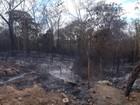 Piauí pede que governo federal envie  aeronaves para combate a incêndios
