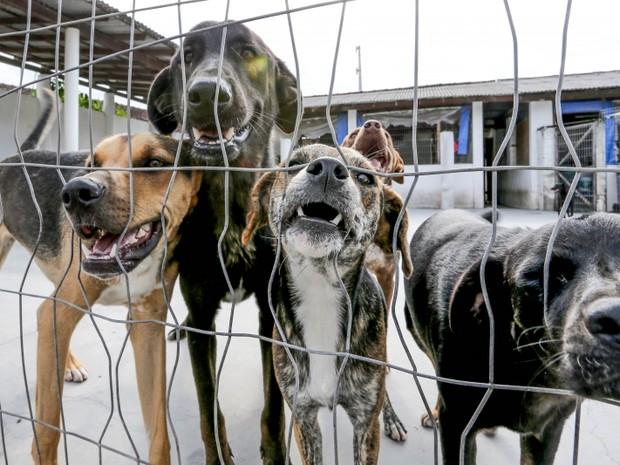 Mais de 100 animais estão disponíveis para adoção em eventos na Grande Florianópolis (Foto: Cristiano Andujar/Divulgação)