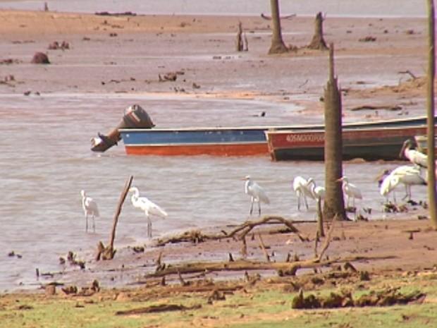 Seca prejudica o turismo da pesca no noroeste paulista (Foto: Reprodução/TV Tem)