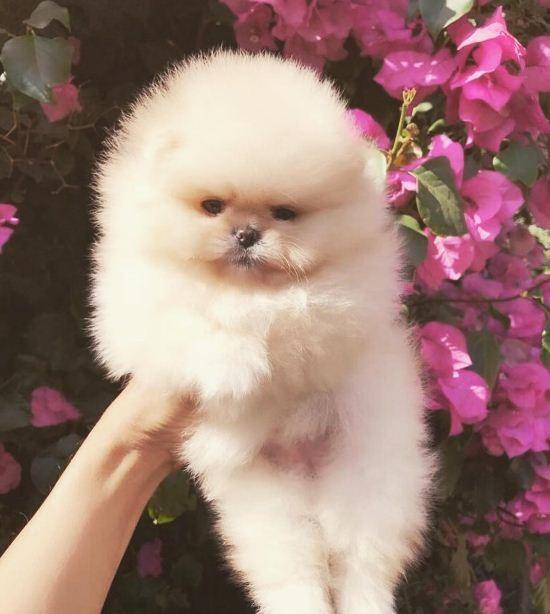 O cãozinho de North West está sem nome - e Kim Kardashian quer que você escolha qual será! (Foto: Reprodução/Instagram)