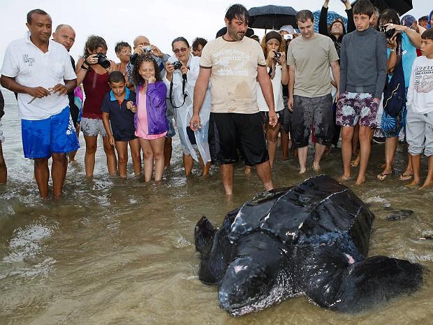 Tartaruga gigante 3 (Foto: Jerome Roux/AFP)