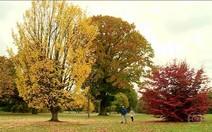Outono em Londres