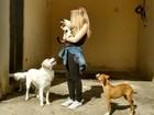 Domesticação dos cachorros ocorreu 2 vezes em partes distintas da Eurásia