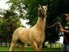 Criadores de Minas Gerais investem em cavalos de elite para competições