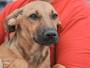 Associação de proteção de animais faz feira de adoções em Cascavel