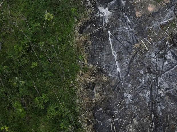 Área devastada ao lado de floresta virgem na reserva indígena do rio Alto Guama, em em Nova Esperança do Piriá (PA). Os fotógrafos Nacho Doce e Ricardo Moraes, da Reuters, viajaram pela Amazônia registrando formas de desmatamento. Foto de 29/9/2013. (Foto: Ricardo Moraes/Reuters)