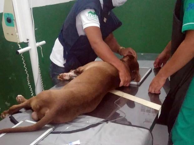 Cachorro passou por exames em clínica veterinária após resgate feito por ONGs em João Pessoa (Foto: Reprodução/Facebook.com/missaopatinhasfelizes)