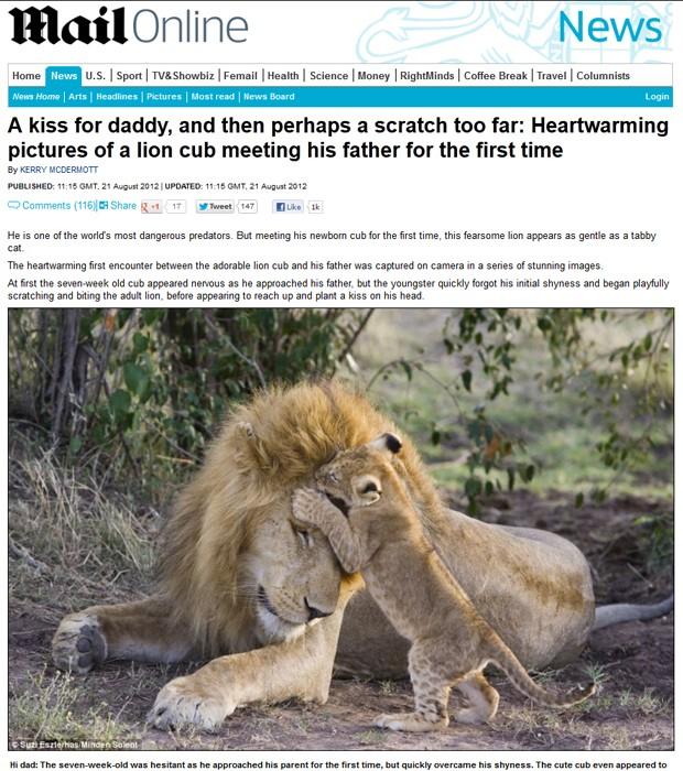 """Leãozinho morde orelha do pai; segundo fotógrafa, filhote demonstrava nervosismo quando encontrou adulto (Foto: Reprodução/""""Daily Mail"""")"""