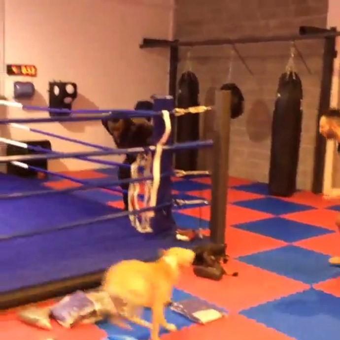 Balotelli foge de cachorro em academia