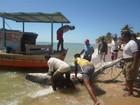 Tubarão de 2,5 metros é capturado e morto por pescadores no sul da Bahia