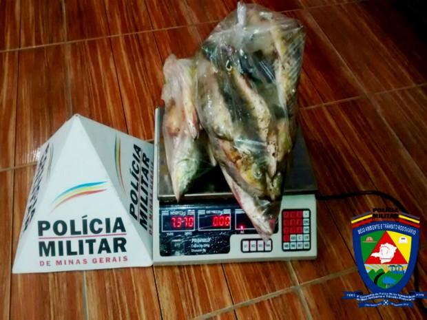 Pescados foram apreendidos pela PM nesta sexta (30) em Araguari (Foto: Polícia Militar de Meio Ambiente/Divulgação)