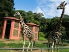 Zoológico de Curitiba fecha durante dois dias para manutenção