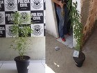 Dois jovens são presos suspeitos de cultivar maconha em casa no Piauí