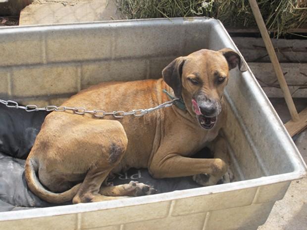 Cadela apelidada de 'Carminha' passou a noite tranquila na Suipa (Foto: Renata Soares/G1)