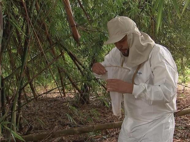 Agente tenta capturar mosquito na mata onde macaco morreu (Foto: Reprodução/ TV TEM)