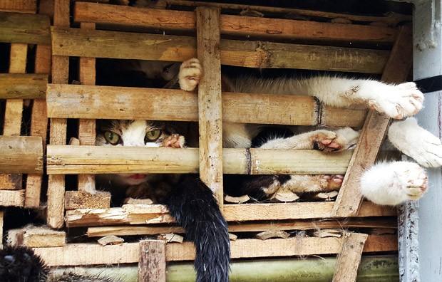 """Foto tirada em 27 de janeiro mostra gatos contrabandeados que seriam usados para """"consumo humano""""  (Foto: STR/AFP)"""
