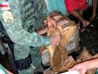 Mais de 100 kg de pescado ilegal são apreendidos na Panair em Manaus