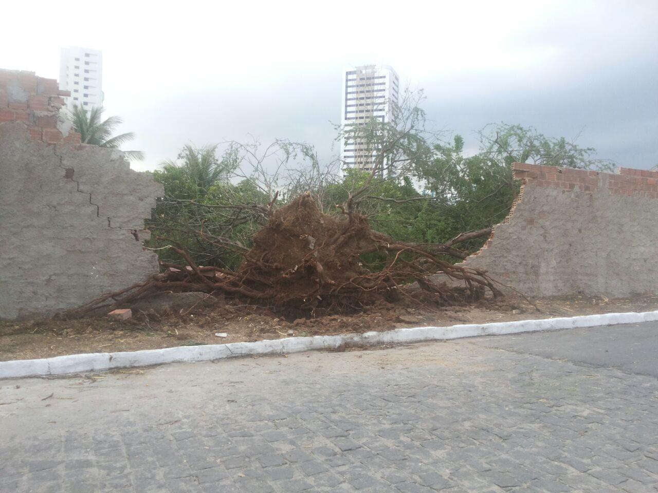 Chuva forte com ventos derruba árvores e muros em Caruaru, Pernambuco (Foto: Alessandra Costa/ G1)