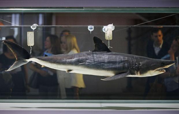 Museu Oceanográfico de Mônaco exibe exposição com tubarões (Foto: Valery Hache/AFP)