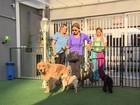 Pracinha para cachorro é opção para pets e seus donos passarem o tempo