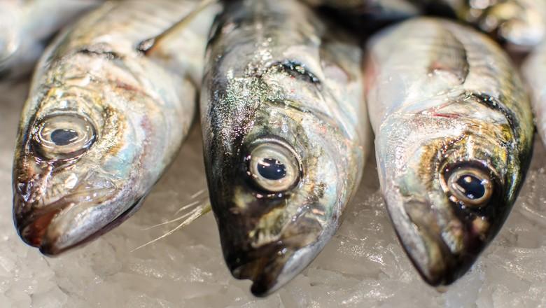 peixe-fresco (Foto: Michele Ursino/CCommons)