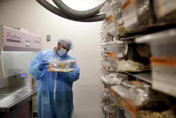 Charles Cook, do laboratório Champions Oncology, segura uma gaiola de plástico com um camungongo que tem fragmentos de tumor de um paciente (Foto: AP Photo/Patrick Semansky)