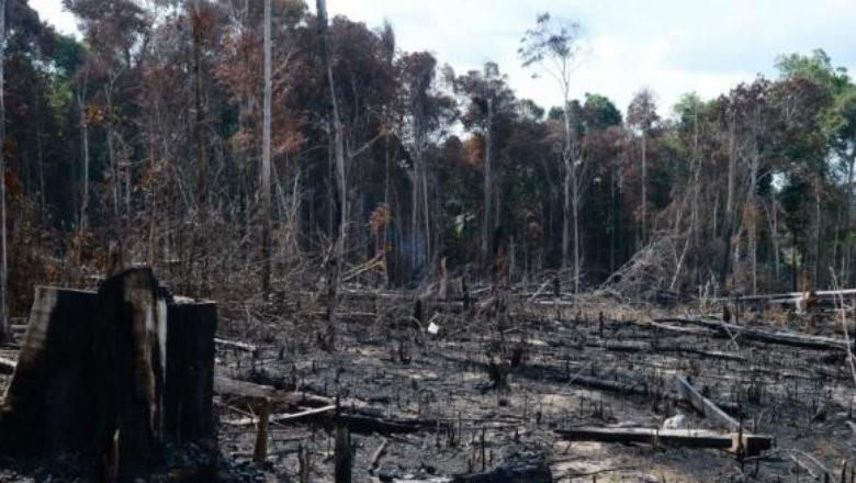 desmatamento-amazônia-legal-sustentabilidade (Foto: Reprodução/AgênciaBrasil)