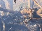 Poços de Caldas lidera ranking dos bombeiros em número de queimadas