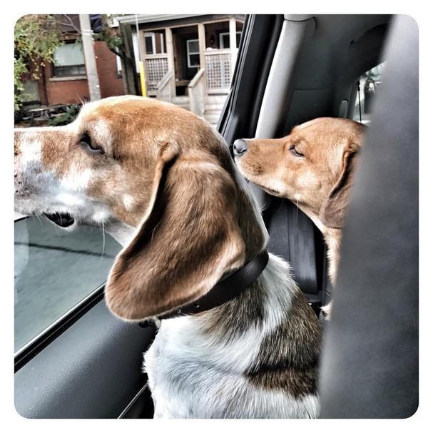 Os cachorrinhos – adotados! – de Meghan (Foto: Instagram/Reprodução)