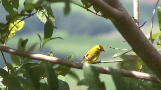Órgãos ambientais devolvem mais de 120 animais silvestres à natureza em Alagoas