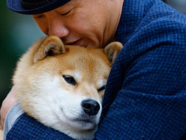 'Cão mais feliz', Maru tem mais de 2 milhões de seguidores no Instagram (Foto: Shizuo Kambayashi/AP)