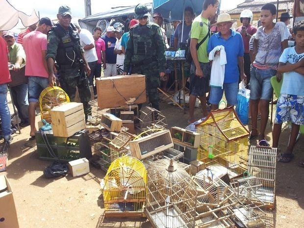 Alguns animais estavam debilitados entre filhotes e aves raras (Fot Polícia Militar/Divulgação)