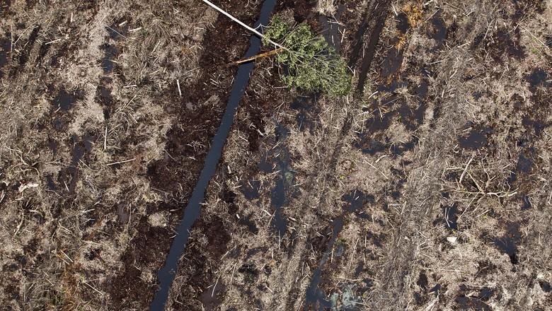 desmatamento-sustentabilidade-meio-ambiente (Foto: Getty Images)