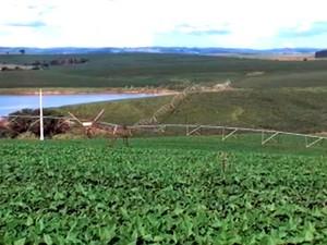 Produtores de milho comemoram resultados com irrigação no RS (Foto: Reprodução/RBS TV)