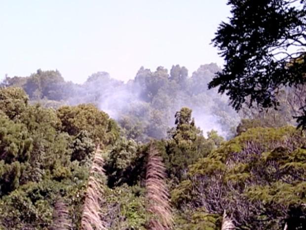 Vigilante explicou que 'bola de fogo' caiu em área de mata fechada, em Manguinhos, na Serra (Foto: Reprodução/TV Gazeta)