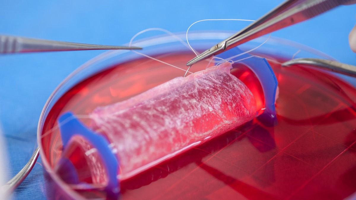 Cientistas criam o órgão em laboratório, empilhando células (Foto: Wake Forest Institute for Regenerative Medicine)