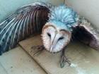 Coruja com sinais de desnutrição é capturada em empresa de Uberlândia