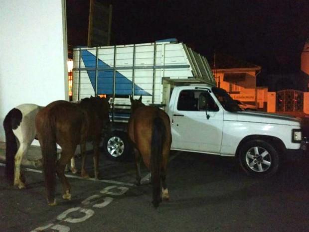 Dupla é presa após furtar cavalos em propriedade rural de Itu (Foto: Polícia Rodoviária/Divulgação)