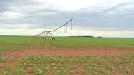 Agricultores investem no cultivo de feijão em Mato Grosso