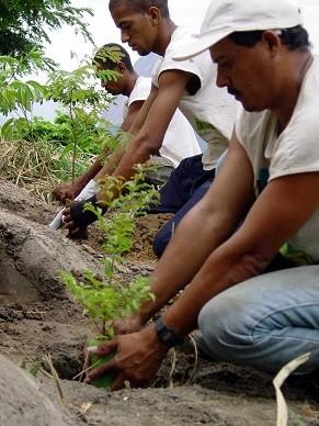 Prefeitura usa conhecimento da população local para fazer o plantio (Foto: Divulgação/ ASCOM/SMAC)