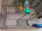 Polícia apreende 32 aves silvestres e donos recebem multa de R$ 16 mil