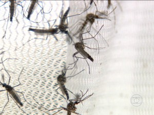Dengue (Foto: Rede Globo)