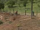 Sujeira em terreno causa infestação (Reprodução/TV TEM)