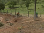 Sujeira em terreno causa infestação de escorpiões em São Miguel Arcanjo