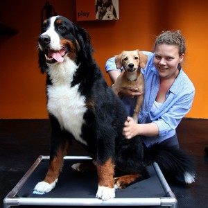Fabiana e seus cães (o maior foi quem teve alergia) (Foto: Christian Castanho)