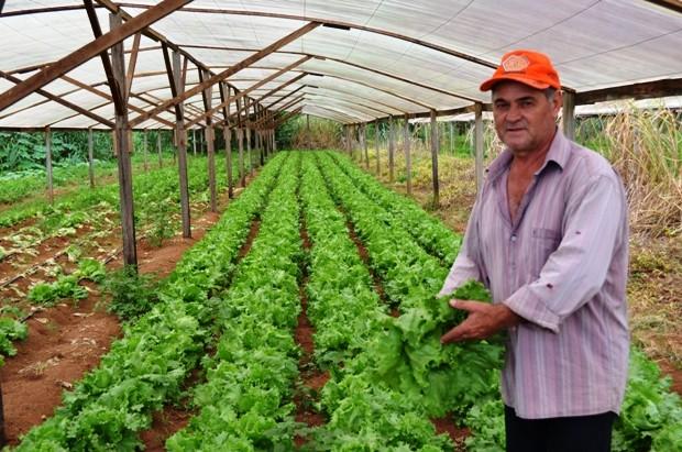 Estufas garantem produ o de hortali as no per odo de chuva em ro - Estufa para habitacion pequena ...