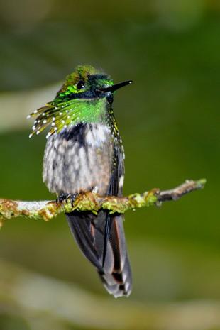 topetinho-verde_EPTV (Foto: Rudimar Narciso Cipriani/ TG)